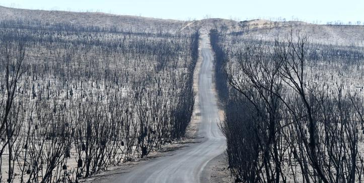 KI bushfires-David Mariuz.png